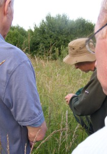 Adrian identifying one of the rarer plant species in the country park