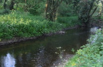 Pictures from the Easthills Wood evening walk.